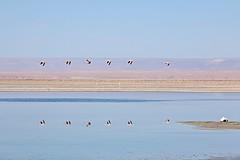 squad (daniel.virella) Tags: reflection reflex andes suramérica américa chaxa atacama chile salar flamingo lagoon water mountain lake landscape sky picmonkey
