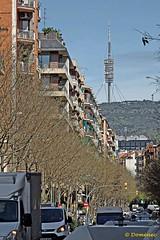 Barcelona (Domènec Ventosa) Tags: barcelona cataluña plaza calle gente árboles catalonia square street people trees