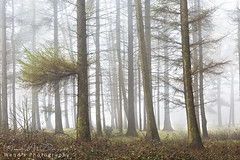 Misty woods, North Yorkshire (Wend's photography) Tags: mist fog atmosphere britain countryside england landscape moors northyorkshire northyorks yorkshire woods woodland forest rural scenery trees uk unitedkingdom wendsphotography wwwwendsphotographycouk photography