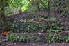Trunyan Village Graveyard, Bali 1 (Petter Thorden) Tags: bali indonesia kintamani lake gunung batur trunyan