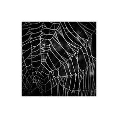 The Architecture (ssoross1) Tags: spiderwebs