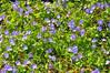 A sea of flowers (DameBoudicca) Tags: sweden sverige schweden suecia suède svezia スウェーデン öhr ör flower blossom blomma blüte flor fiore fleur 花 はな geraniumpratense meadowcranesbill meadowgeranium ängsnäva wiesenstorchschnabel géraniumdesprés
