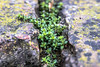 (martinap.1) Tags: nature green nikon d3300 macro makro 105mm natur