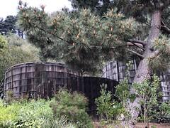 Water Tanks (Melinda Stuart) Tags: spring wood old tanks water garden ucbg pine cones tree botanical campus strawberrycanyon winter