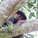 A boy sleeps in the branches