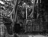 Ta Prohm Temple (Waldemar*) Tags: asia southeast កម្ពុជា cambodia angkor siemreap taprohm temple khmer tombraider jungle trees ruins rajavihara mahāyāna buddhism buddhist