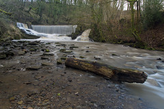 """YARROW VALLEY PARK WEIR, BIRKACRE, CHORLEY, LANCASHIRE, ENGLAND. (ZACERIN) Tags: """"yarrow valley park weir"""" """"river yarrow"""" valley"""" """"chorley"""" """"lancashire"""" """"england"""" """"pincock park"""" """"pictures of weirs"""" weirs in chorley"""" """"birkacre"""" """"birkacre yarrow """"weirs on the river """"h2o"""" """"river"""" """"uk"""" """"united kingdom"""" """"duxbury"""" """"zacerin"""" lancashire"""" """"christopher paul photography"""" yarrowvalleyparkweir duxburyweir pincockweir yarrowvalley chorley lancashire zacerin christopherpaulphotography christopher photography"""