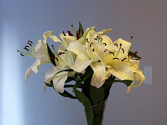 The Spring Within (Haytham M.) Tags: home house spring hope white indoor indoors flowers