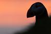 Papageientaucher - Atlantic Puffin (jansohler) Tags: alken atlanticpuffin europa faroeislands faroes fauna fraterculaarctica färöerinseln mykines nichtsperlingsvögel papageientaucher puffin vögel wirbeltiere
