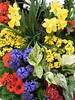 Chicago, Macy's Flower Show, Once Upon Springtime,  Flower Medley (Mary Warren 10.3+ Million Views) Tags: chicago macys flowershow nature flora plants blooms blossoms flowers daffodils daisies hyacinths blue yellow red orange green leaves foliage