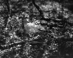 Sunlight is Painting (macromary) Tags: 120 120film analog florida pentax6x7 mediumformat foma fomapan fomapan100 blackwhite analogphotograph bokeh bw blackandwhitefilm filmcamera film mechanicalcamera vintage vintagecamera nwflorida 105mm f24 rodinal marioncounty nature jar bottle emptyjar woods urbex rurex flurbex abandoned