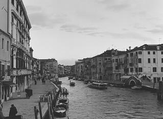 o green world (venezia 81)