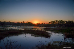 Sunrise Over the Marsh at Circle B Bar Reserve (alan jackman) Tags: jackmanjackman jazz bird birding nikon d7000 wetlands alanjackman tamron 150600mm circlebbarreserve circlebbar lakeland florida telephoto flight bike velo bicycle folding silhuette sunrise