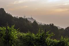 Vigneti a La Morra_Y3A9255 (candido33) Tags: barolo lamorra paesaggidelvino piemonte serradenari alba aurora filari vigne vigneti vitigni