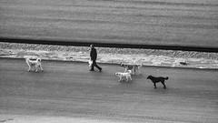 Man and dogs #45 (Streets.and.Portraits) Tags: dog animal man road street bw blackwhite monochrome samsung nx2000 people