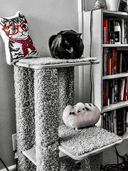 """To write well, express yourself like the common people, but think like a wise wo/man."" ―Aristotle 🐱 🐈 🐱 (anokarina) Tags: colorsplash psmobile adobephotoshopexpress 🐱 🐈 appleiphone6s highlands louisville kentucky ky backcat kitten kitty pet pillow tower red books bookcase library pusheen plushy stuffed toy pink"