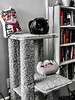 """""""To write well, express yourself like the common people, but think like a wise wo/man."""" ―Aristotle 🐱 🐈 🐱 (anokarina) Tags: colorsplash psmobile adobephotoshopexpress 🐱 🐈 appleiphone6s highlands louisville kentucky ky backcat kitten kitty pet pillow tower red books bookcase library pusheen plushy stuffed toy pink"""