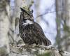 Great Horned Owl (J.Hunter Photography) Tags: greathornedowl hoot hooter birdofprey alaska nature naturephotography wildlifephotography birdphotography ngc