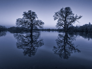 A Pair of Severn trees