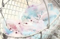 Sweet spring picking (*c*j*) Tags: ctt 7dwf filltheframe crazytuesdaytheme rose rosa pink lifeisarainbow