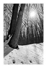Forest details... (lupuszka) Tags: forest woods woodland winter spring sun sunlight star cold nature trees tree monochrome blackandwhite bw natural backlight texture analog film neopan acros fuji neopanacros