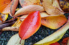 Autumn leaves, Kanazawa-jo (Eric Flexyourhead) Tags: kanazawa kanazawashi 金沢市 ishikawa 石川県 hokuriku 北陸地方 chubu 中部地方 japan 日本 kanazawacastle kanazawajo 金沢城 detail fragment autumn fall leaf leaves red foliage fallen wet damp ricohgr