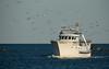 Llegando a puerto bien acompañado (dnieper) Tags: barcopesquero llegadaapuerto gaviotas puntadelmoral huelva spain españa