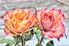 Two roses (Jan 1147) Tags: tworoses tweerozen roos rozen rose roses bloem bloemen flower flowers depinte belgium tekening drawing