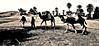 Desierto de Oulad Driss (KRAMEN) Tags: dromedarios desierto desert trekking