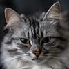 Grace, het fotomodel (Marjan van de Pol) Tags: 5dmarkiv canon canon5d dordrecht grace katten nederland favorite fave faved