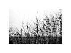 2. (kotmariusz) Tags: fromcar trees poland landscape krajobraz drzewa monochrome blackandwhite monochromatic monochrom bw canon efs24mm
