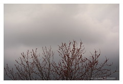 The spring vocations (GP Camera) Tags: nikond7100 nikonafsdx55300mmf4556gedvr trees alberi branches rami tenderleaves foglietenere cloudysky cielonuvoloso lightandshadows lucieombre textures trame shades sfumature spring primavera silence silenzio focus messaafuoco vignetting details dettagli whiteframe cornicebianca italy italia piemonte monferrato darktable gimp opensource freesoftware softwarelibero digitalprocessing elaborazionedigitale