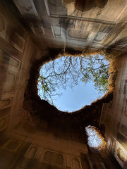 Looking up from a ruin (Arvind Iyer Mobile Photos) Tags: ruin ruins trees wideangle lg v30 india history