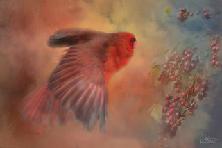 The Cardinal and Berries...