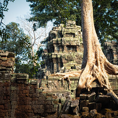 Ta Prohm (jameslf) Tags: angkor architecture buildings cambodia siemreap taprohm temples trees