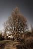 The Tree (Fotofabrik Itzehoe) Tags: baum tree itzehoe schleswigholstein kreissteinburg gewaltig