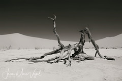 Deadvlei, Namib-Naukluft National Park, Namibia (Jean-Marc Vogel Photography) Tags: deadvlei namibnaukluftnationalpark namibia nb noiretblanc noir blanc nero blanco schwarz weiss black white bw blackandwhite warm chaud chaleur fournaise marais salant climat climate réchauffement climatique tree dead arbre mort national park namib naukluft