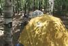 Macomb/South Dix/Grace Peak/Hough/Dix - June 12, 2016 (rickcalzi) Tags: hiking camping backpacking adirondacks adirondack adk mountains mountain range forest trail