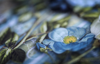 Blue flower on Book Cover