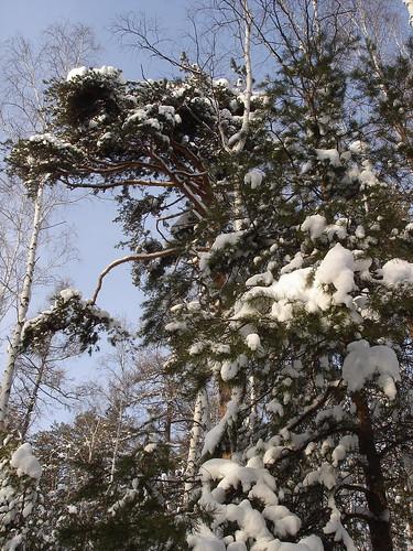 Зимнмй лес у горы Сугомак
