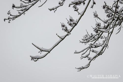 Thillay neige-6