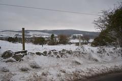 DSC_8027 (seustace2003) Tags: baile átha cliath ireland irlanda ierland irlande dublino dublin éire glencullen gleann cuilinn st patricks day zima winter sneachta sneg snijeg neve neige inverno hiver geimhreadh