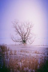 Slough and Tree (Dave Linscheid) Tags: tree snow slough cattails winter spring sky rural aviaryphotoeditor toolwizphotos county mn minnesota usa butterfield watonwancounty samsunggalaxytablet march2018 ice water vignette
