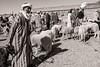 Zagora Cattle Market 2018 II (Tom Levold (www.levold.de/photosphere)) Tags: fuji fujix100f marokko morocco x100f zagora sw bw männer cattlemarket schafe men viehmarkt people sheep candid porträt portrait o add nik