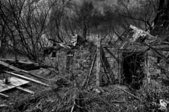 When Life Rots Away(Explore 4/4/18) (CJ Schmit) Tags: wwwcjschmitcom 5dmarkiii canon canon5dmarkiii cjschmit cjschmitphotography rokinon14mmf28 photographermilwaukee milwaukeephotographer photographerwisconsin racine racinephotographer raymond wisconsin barn farm forgotten abandoned decay exploration country spring hidden trees sky grey rock foundation monochrome blackandwhite bw niksilverefex2 outdoors