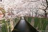 Meguro River (takashi_matsumura) Tags: meguroku tōkyōto japan meguro river tokyo nikon d5300 sakura cherry blossoms ngc afp dx nikkor 1020mm f4556g vr