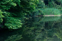 DSC02156 (tomoelwes) Tags: 長野県 信州 聖高原 lake green forest randscape sony a7 zeiss variotessar reflections ilce7m2 7m2