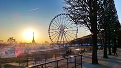 574 Paris en Février 2018 - les Tuileries et la Grande Roue de la Place de la Concorde (paspog) Tags: paris france 2018 février februar february tuileries jardin jardindestuileries granderoue toureiffel sunset coucherdesoleil