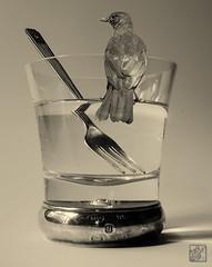 L1001799   BW Water glass & Fork nos 2 +Bird (SaltydogJacko) Tags: glass fork bird bw monochrome leica