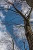 DSC00153 (johnjmurphyiii) Tags: 06416 clouds connecticut cromwell originalarw shelly sky sonyrx100m5 spring usa yard johnjmurphyiii